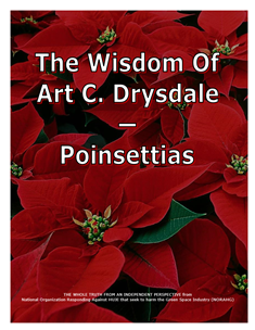 The Wisdom Of Drysdale -- Poinsettias -- 314 x 235 px