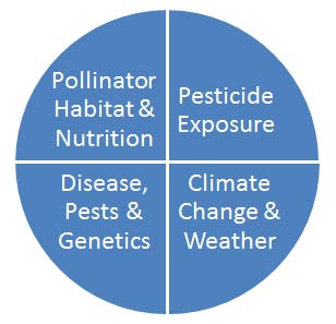 Pie chart outlining the four areas of factors in declining of bees: Nutrition, pesticide, disease, and climate change
